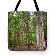 Giant Cedars On Trail Of The Cedars In Glacier Np-mt Tote Bag