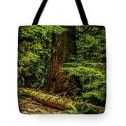 Giant Douglas Fir Trees Collection 3 Tote Bag
