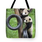 Giant Panda Cubs Tote Bag