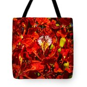 Giant Poinciana Blooms Tote Bag