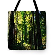 Giant Redwood Forest Tote Bag