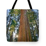 Giant Sequoia Trees Of Tuolumne Grove In Yosemite National Park. Tote Bag