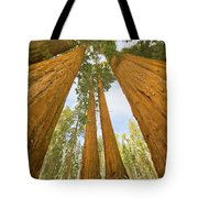 Giant Sequoias And First Snow Tote Bag by Yva Momatiuk John Eastcott