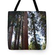 Giant Sequoias - Yosemite Park Tote Bag
