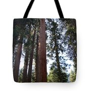 Giant Sequoias - Yosemite Park Tote Bag