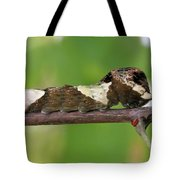Giant Swallowtail Caterpillar Tote Bag