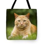 Ginger Cat In Garden Tote Bag