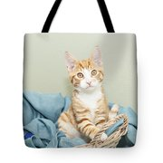 Ginger Kitten Standing In A Basket Tote Bag