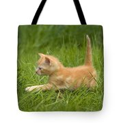 Ginger Tabby Kitten Tote Bag