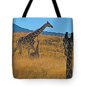 Giraffe Family In Living Desert Museum In Palm Desert-california Tote Bag