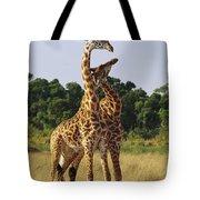 Giraffe Males Sparring Masai Mara Kenya Tote Bag