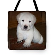 Give Me Your Paw Tote Bag