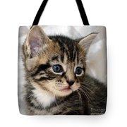 Gizmo The Kitten Tote Bag