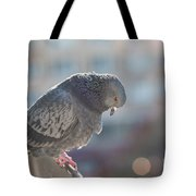 Glance From Above Tote Bag