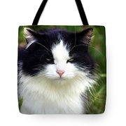 Glaring Cat Tote Bag