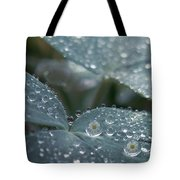 Glass Daisies Tote Bag