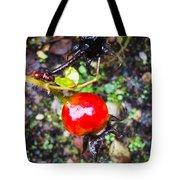 Glistening Wet Rose Hip Tote Bag