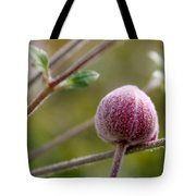 Globe Flower Bud Before The Bloom Tote Bag