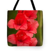 Glorious Glads Tote Bag