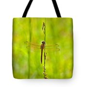 Glorious Golden-winged Tote Bag