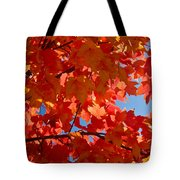 Glowing Fall Maple Colors 3 Tote Bag