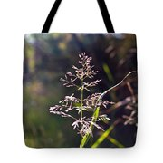 Glowing Grass In Palo Duro Canyon 100613.02 Tote Bag