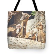 Goats On A Rock Tote Bag