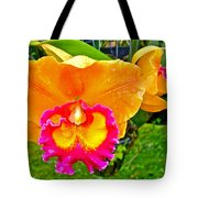 Gold And Pink Orchid At Maerim Orchid Farm In Chiang Mai-thailan Tote Bag