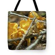 Golden Chanterelle - Cantharellus Cibarius Tote Bag