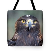 Golden Eagle Lookin' At You Tote Bag