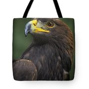 Golden Eagle Portrait Threatened Species Wildlife Rescue Tote Bag