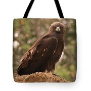 Golden Eagle Tote Bag by Roger Snyder