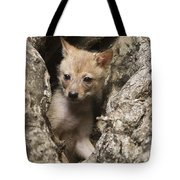 Golden Jackal Canis Aureus Cubs 2 Tote Bag