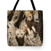 Golden Jackal Canis Aureus Cubs Tote Bag