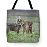 Golden Jackal Canis Aureus Tote Bag
