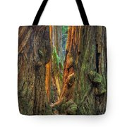 Golden Light Reaches The Grove Floor Muir Woods National Monument Late Winter Early Afternoon Tote Bag
