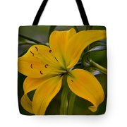 Golden Lily Sway 2013 Tote Bag