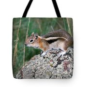 Golden Mantled Ground Squirrel Tote Bag