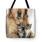 Golden Retriever And Kittens Tote Bag