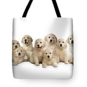 Golden Retriever Puppies, In A Line Tote Bag