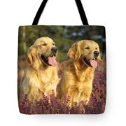 Golden Retrievers Dogs Tote Bag