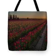Golden Skagit Tulip Fields Tote Bag