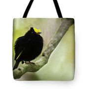 Golden-winged Manakin Tote Bag