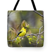 Goldfinch In Spring Tote Bag