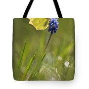 Gonepteryx Rhamni On The Blue Flower Tote Bag