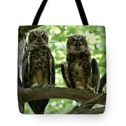 Gorgeous Great Horned Owls Tote Bag