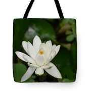 Gorgeous White Lotus Flower Blossom Tote Bag