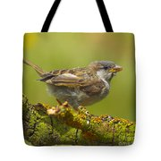 Gorrion House Sparrow Tote Bag