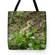 Gosling Chewing On Some Grass Tote Bag