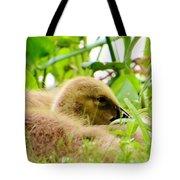Gosling Sleep Tote Bag